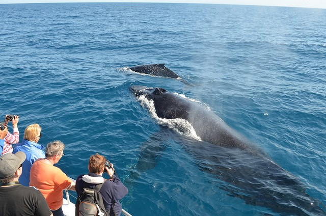 Whale watching -South Africa